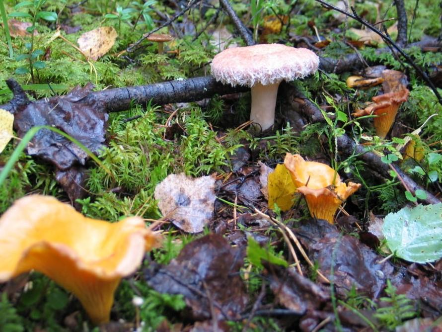 Foto di funghi