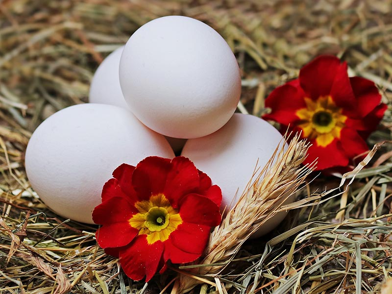 Cloud eggs con germogli